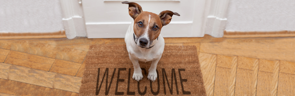Welcome to Buddywalks, which provides a 7 day a week range of pet services across the Southampton area, including dog walking, pet sitting, pet visits and pet transportation